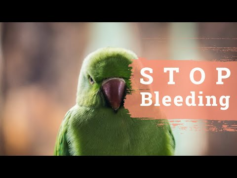 Parrot First Aid: Stop Bleeding & Stabilize Fast