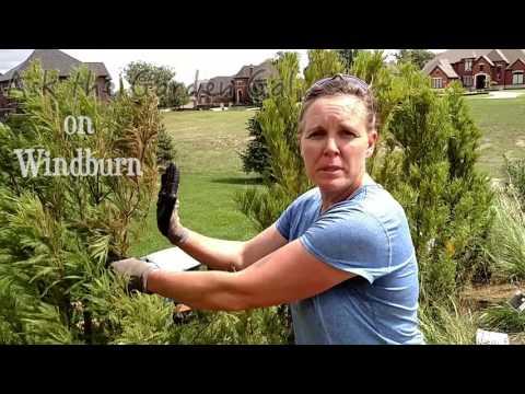 Windburn: what is it?