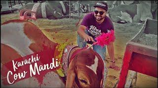 Karachi Cow Mandi 2019   Super Highway   Kashan