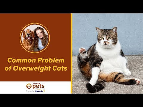 Common Problem of Overweight Cats (Part 1 of 2)