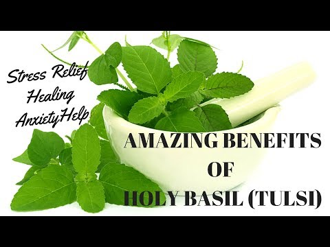Benefits of Holy Basil (Tulsi). Relieve Stress and Anxiety Naturally.