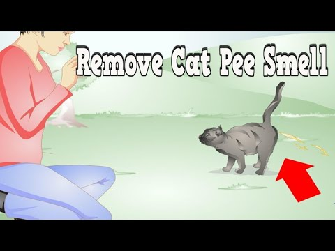 Remove Cat Pee Smell, Cat Pee On Carpet, Cleaning Cat Urine From Carpet, Removing Cat Urine Odor,