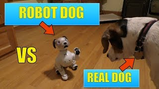 Sony AIBO Robotic Dog Vs A Real Dog - Is This The Future?