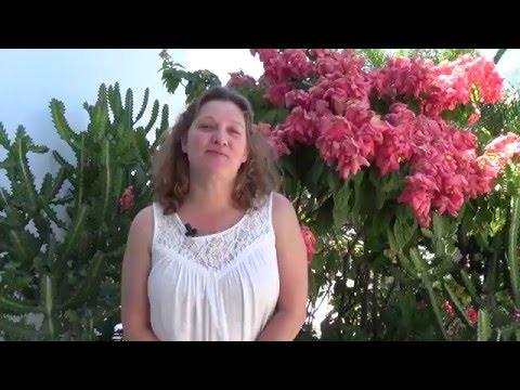 Why Travel Agent Success Kit? Rachael Wade TASK Live Testimonial