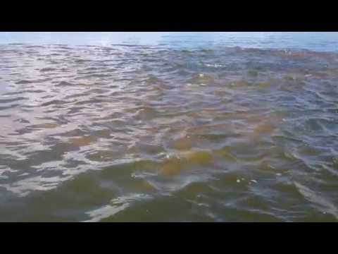 Redfish Fishing (Huge school of spawning reds) Mosquito Lagoon
