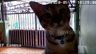 Curious kitten plays with home CCTV camera while owner is out