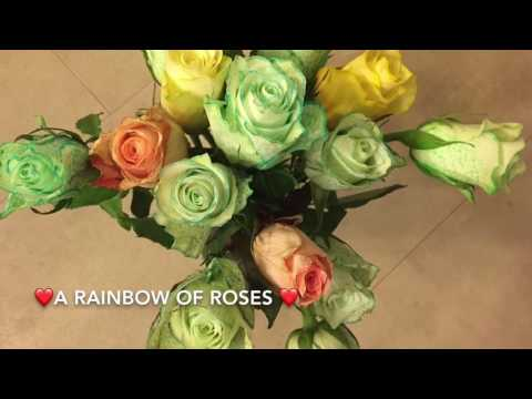 How to make RAINBOW ROSES experiment ( Hoe maak je een regenboog van rozen ) DIY