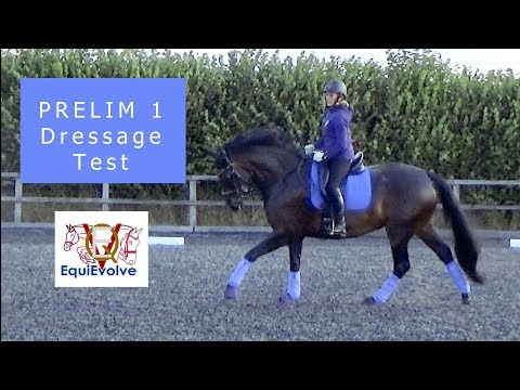 Learn The Prelim 1 Dressage Test