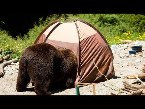 How to Protect Yourself from Bears | Camping