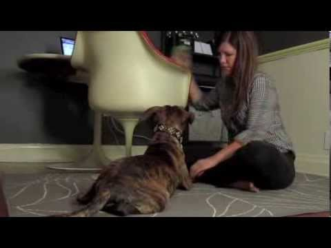 Conditioning Your Dog to Love Nail Trimming