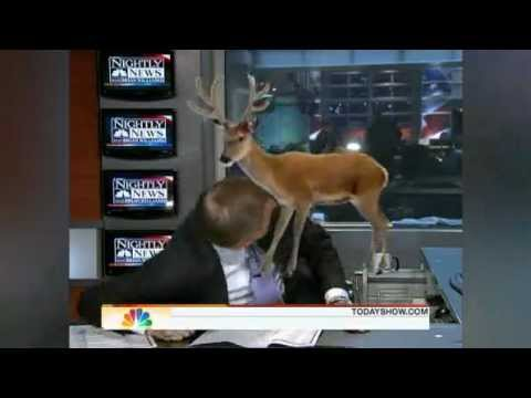 Today Show Bloopers
