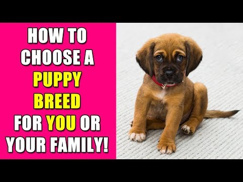 How to Choose A Puppy Breed For You / Your Family - Knows to Nose