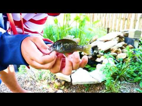 mini backyard pond fishing!!!