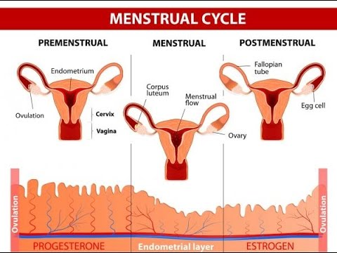 This Is How You Can Maintain Regular Menstrual Cycle