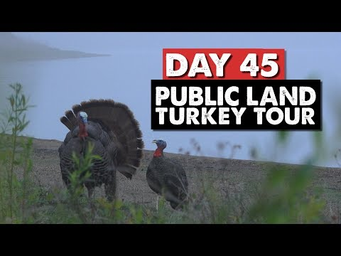 GHILLIE SUIT GOBBLER, SHOT HITS THE WATER! - Public Land Turkey Tour Day 45