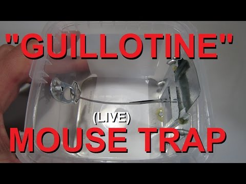 Cheap, effective,  ***(LIVE)*** DIY MOUSE TRAP... I call the Guillotine.