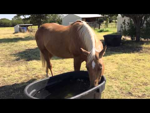 Why You Should NOT Poison or Worm Horses - Worm A Horse That Needs It ONLY