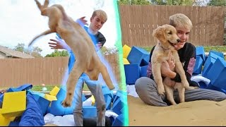 TRYING TO TEACH MY DOG A BACKFLIP!