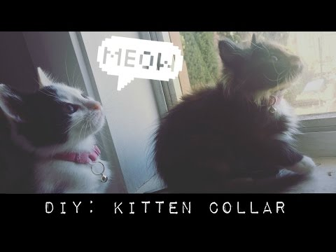 DIY #1 || Turn A Bra Strap Into A Collar For Kittens!
