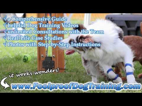 How To Stop A Dog Barking At Night - Dog and Puppy Training