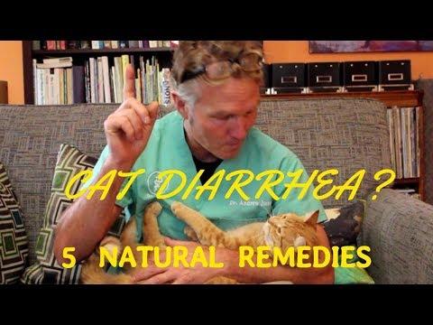 5 Remedies for Cat Diarrhea