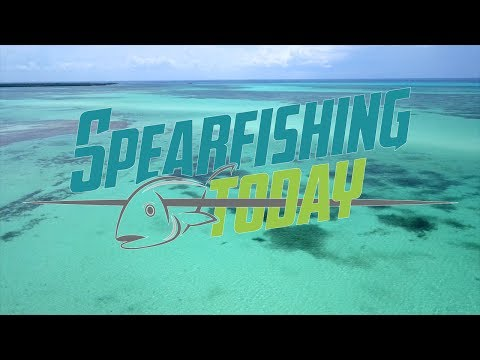 We are... Spearfishing Today Mexico  | Cancun  | Cozumel | Holbox  | Playa del Carmen  | Tulum