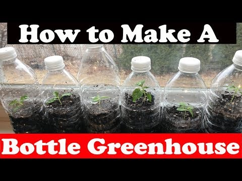 How to make a Bottle Greenhouse