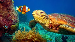 11 HOURS Stunning 4K Underwater footage + Music | Nature Relaxation™ Rare \u0026 Colorful Sea Life Video