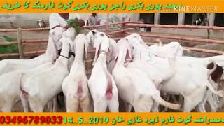 rajan puri bakra farm Videos - 9tube tv
