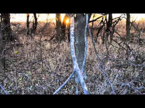 Sumner County Hunting Land for sale at auction near Wichita and Sedgwick County KS