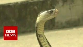 Thai survival training: Drinking cobra blood in the jungle - BBC News