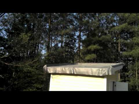 Briggs Ave Green Roof Shed