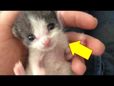 Man Saves Orphaned Kitten—1 Year Later, Baby Still Repays Him With Endless Snuggles And Love
