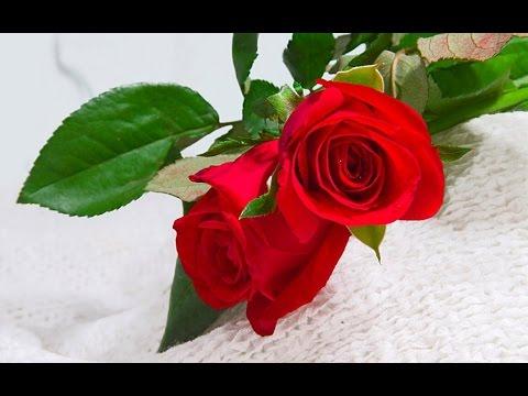 beautiful flowers -  beautiful flowers images