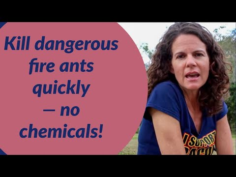 Natural Fire Ant Killer