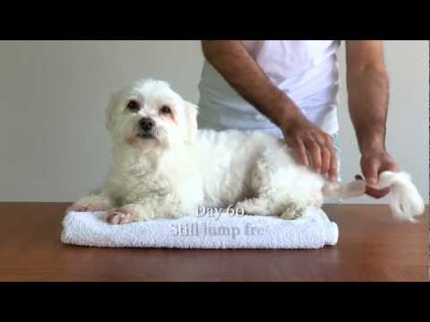 Dog vs Lump HD (how to destroy cysts & tumours)