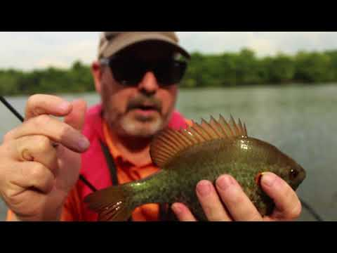 Russ Bailey and Billy Blakley on Reelfoot Lake (Bluegill and
