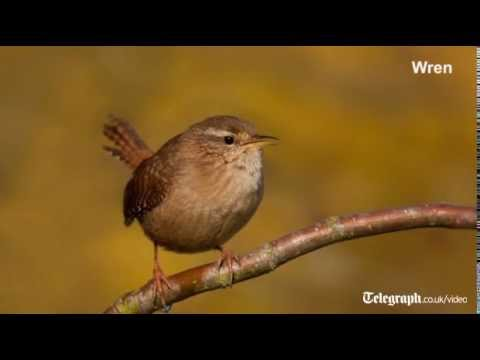Birdsong for beginners