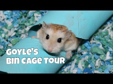 Roborovski Hamster Bin Cage Tour