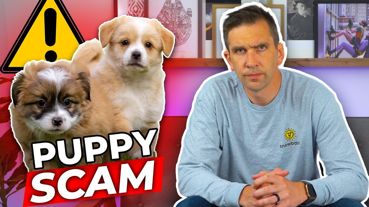 Watch Out For Puppy Scammers!