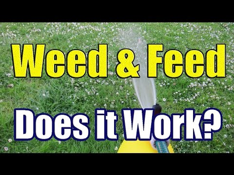 How to Apply Liquid Weed N Feed (The Results of Weed and Feed with DaznDi Properties)