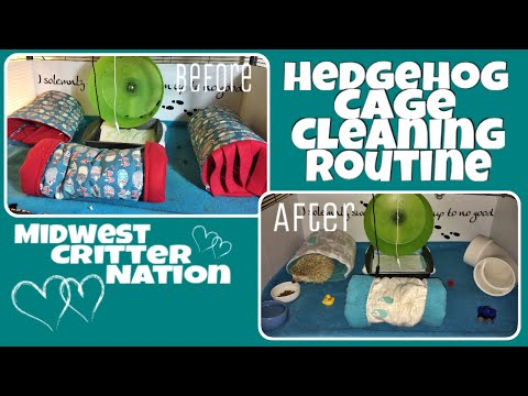 Hedgehog Care: Cleaning Routine || Midwest Critter Nation