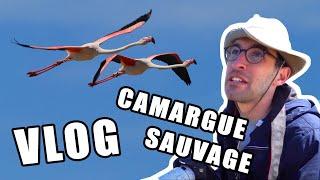 EXPÉDITION CAMARGUE ! (le vlog du soleil)