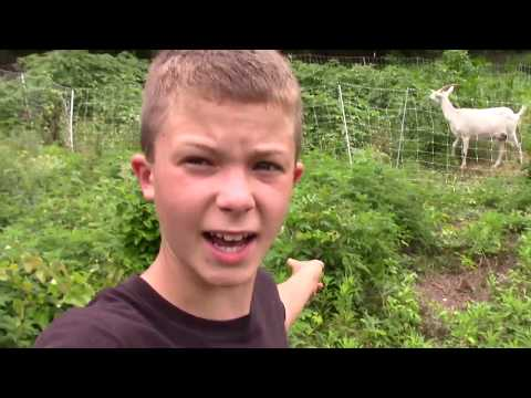 12 year old moves Premier 1 electric fence to high brush area