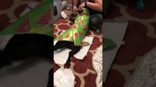 Dog Likes to Wrapped in Paper