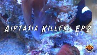 arizonafishkeeping videos