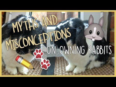 MYTHS & MISCONCEPTIONS On Owning Rabbits