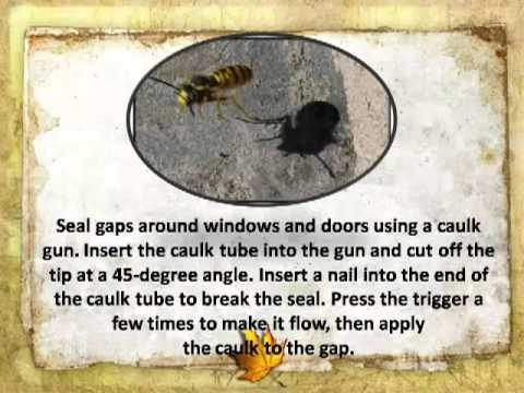 How to Prevent Insects around the House & Garden - Home and Garden Instructions