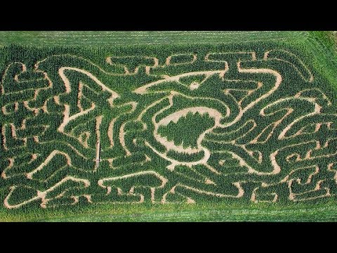 the best way to get out of a corn maze