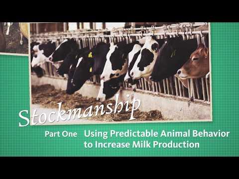 Stockmanship Part 1 - Using Predictable Animal Behavior to Increase Milk Production